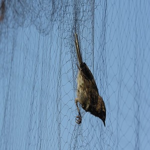 Importance of Bird Control Netting